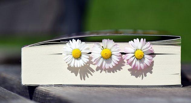 ...book-2319957__340